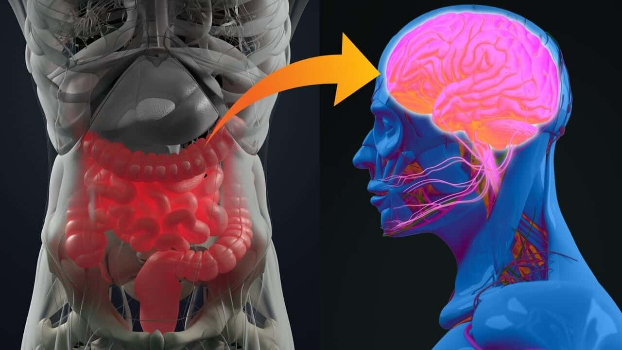 Gut Brain Connection Autism