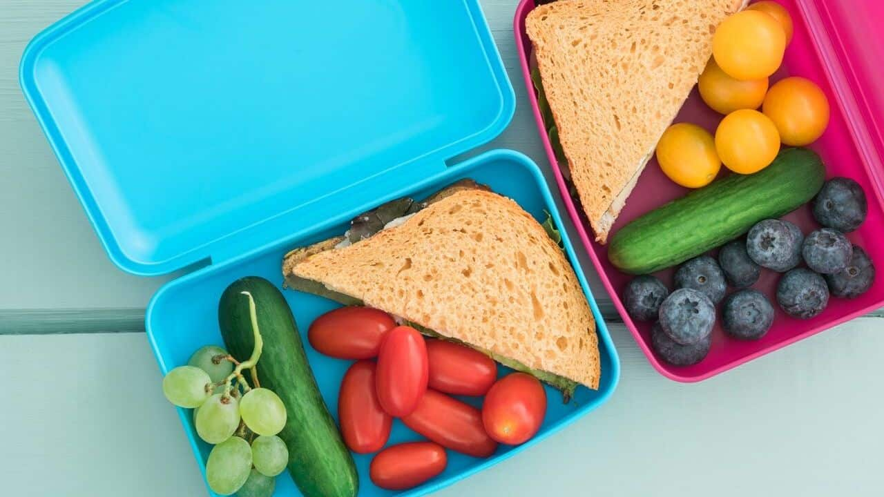 autism nutrition school